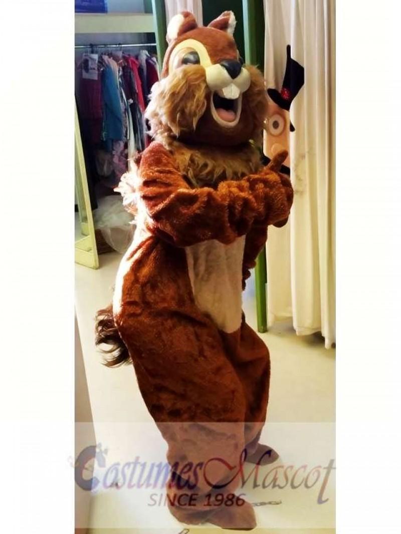 Animal Squirrel Mascot Costume
