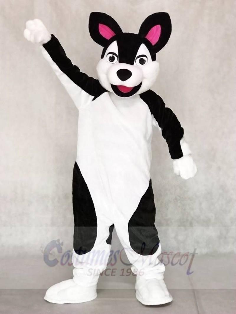Black and White Husky Dog Mascot Costumes Animal