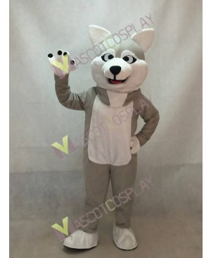 Gray Sled Wolf Dog Mascot Costume with White Belly