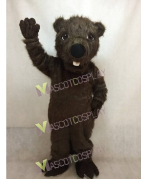 Cute New Beaver Mascot Costume
